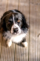 Dogs welcome at Sweet Donside Cabins and Sweetheart Cottage, holiday accommodation in the Scottish Highlands